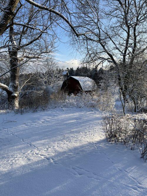 Solig dag ute i snön på Berga Gård