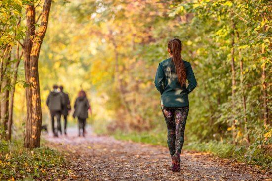 Promenad i skogen. Solen lyser