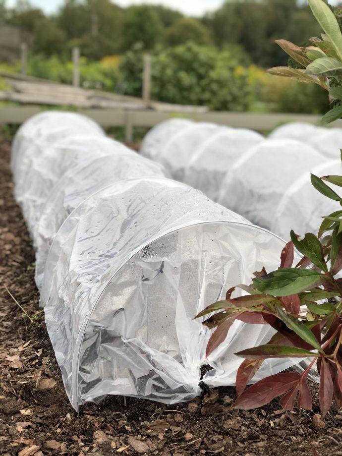 Plantering utomhus