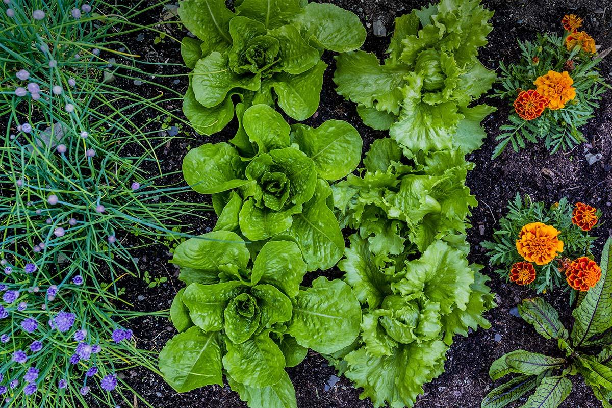Gröna växter odlade av daglig verksamhet