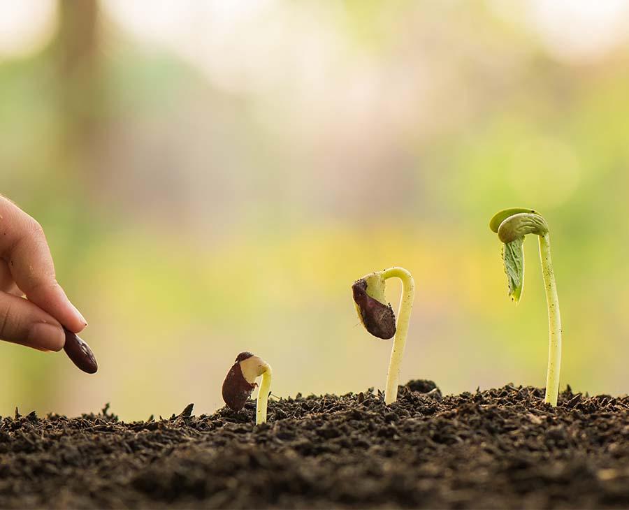 Olika stadium I växters utveckling