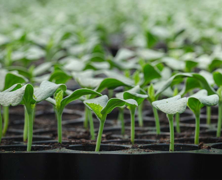 Grödor i plasthållare som görs redo för att odlas