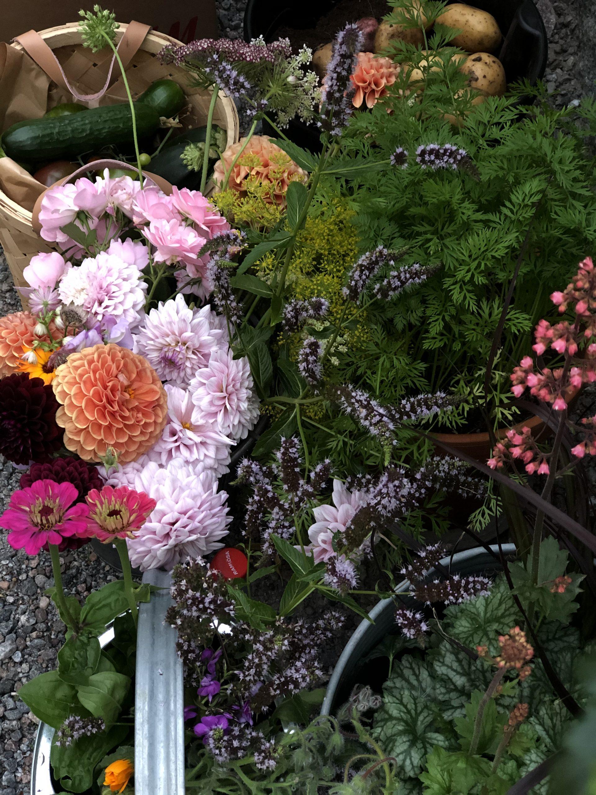 Färglada blommor, gröna växter samt grönsaker från odlingen på Mindme