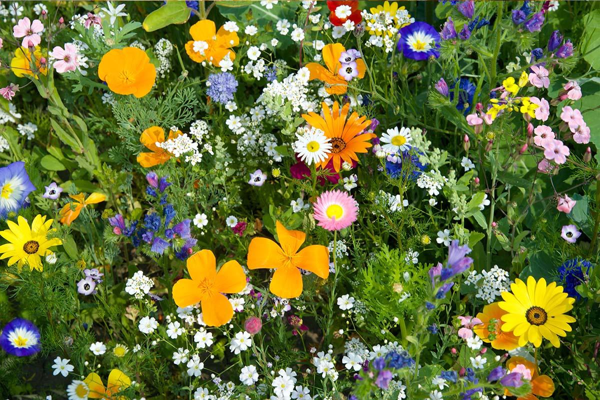 Olika färglada blommor samt gröna växter. Glatt budskap