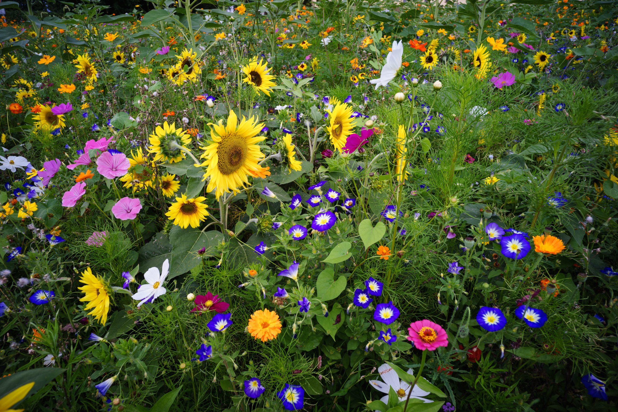 Olika färglada blommor samt gröna växter