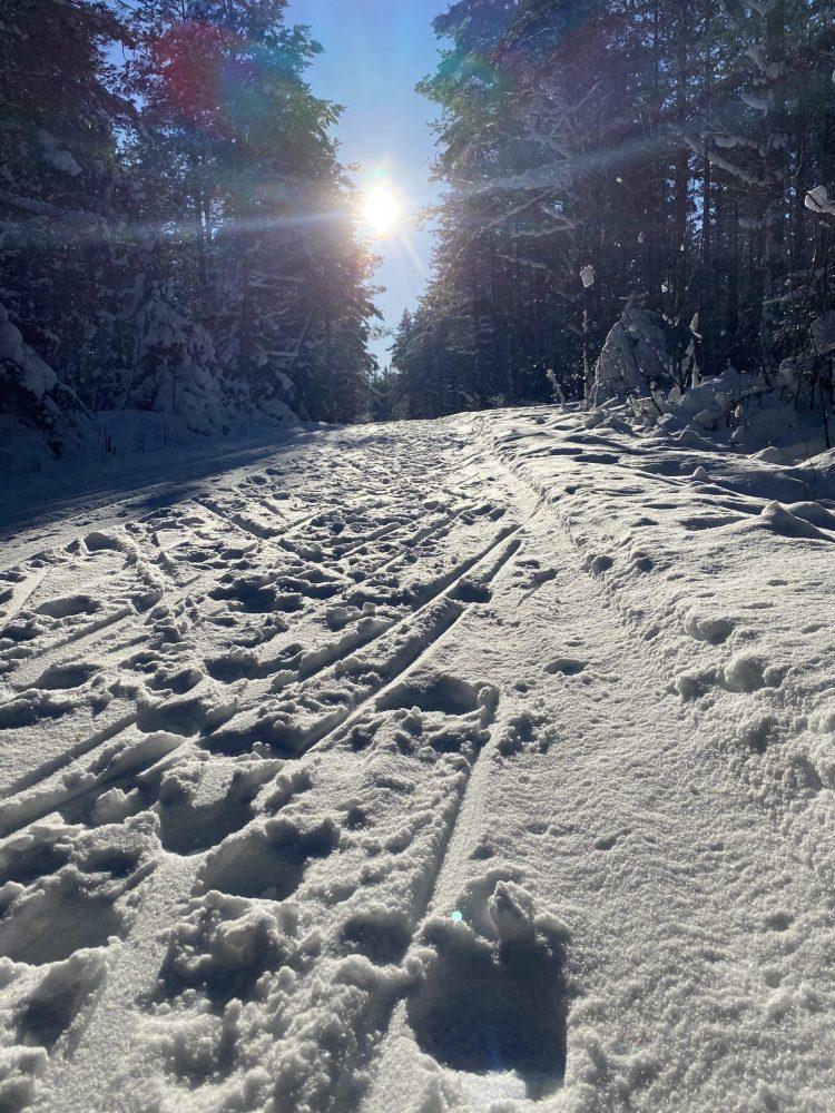 Promenad under en solig vinterdag